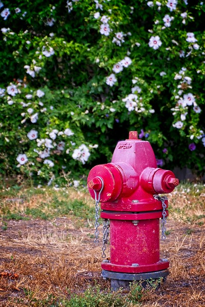 Lisa and I attended a beautiful wedding and celebration on Friday the 13th in Bountiful, Utah. This is the fire hydrant outside of the venue where it all took place.