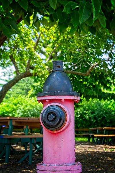 Fire hydrant in the Kansas City Zoo, May 2019