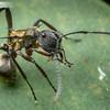 Ant Bath