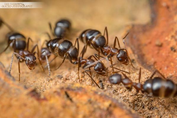 Browsing Ants IV