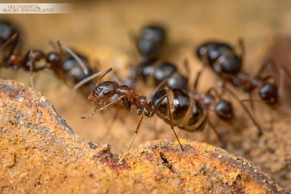 Browsing Ants V