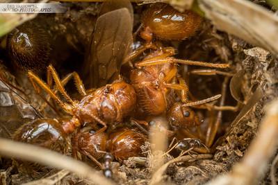 Nest is Full