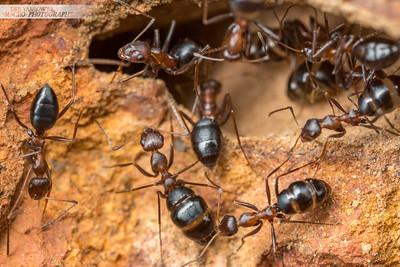 Browsing Ants II