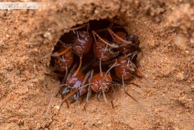 Nest Defenders
