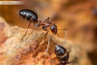 Browsing Ants I