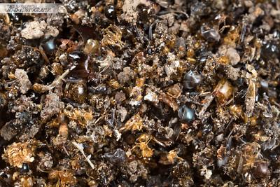 Ant Graveyard