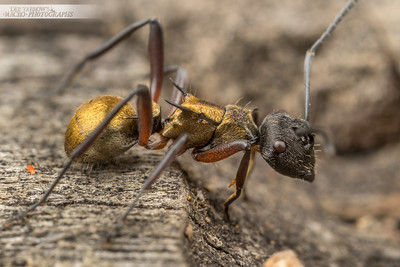 Ant and Friend