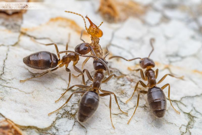 Termite for Dinner