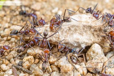 Beef Ants Vs Bagworm