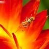 Paper Daisy Wasp