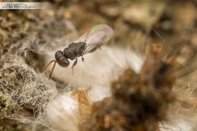 Wasp and Caterpillar
