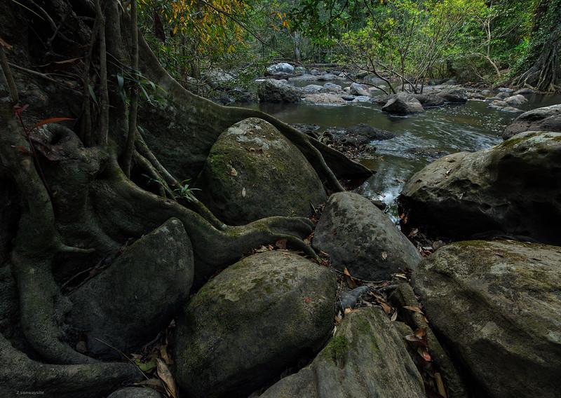Beneath the Sorrow Tree