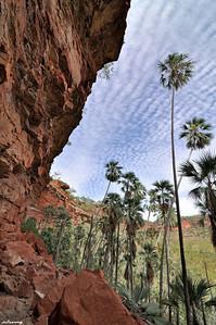 Livingstonias ; East Gregory Escarpment