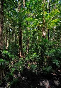 34  Monsoon Rainforest