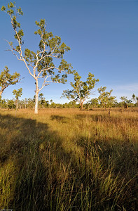 Morning in Savanna ; Top End