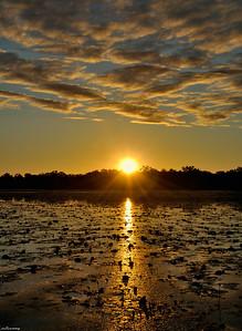Dawn ; Mary River billabong
