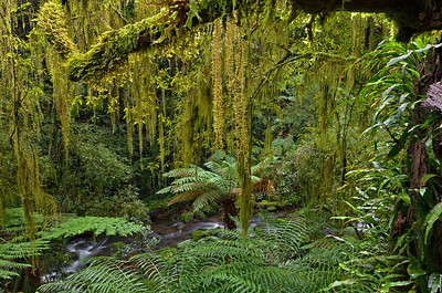 6  Antarctic Beech Forest; The Valley  Floor