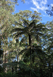 Tree Fern ; In the Shade