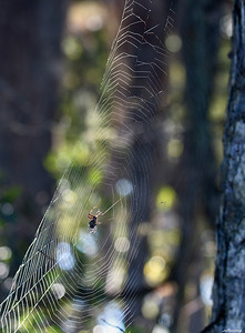 Spider's time