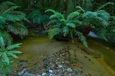 Dusky Creek