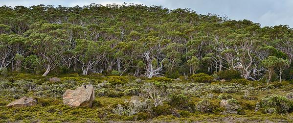 Wood ; Tasmania