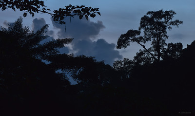 Twilight ; Borneo