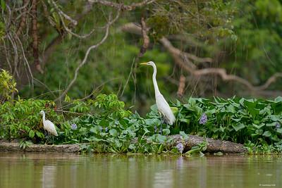 Forest ; Borneo VIII