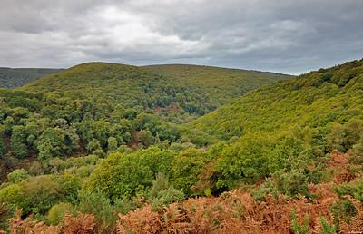 The Horner Wood
