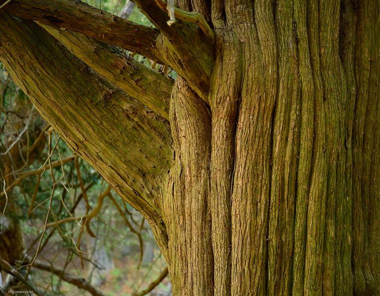 Eyeworth Wood II