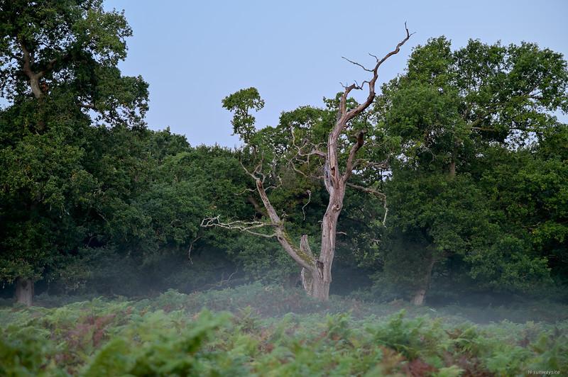 Eyeworth Wood