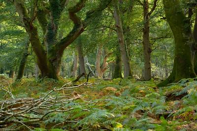 Frame Wood II