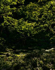 Forest ; Gwynedd