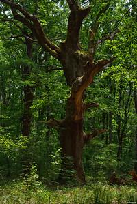 Strandzha Forest ll