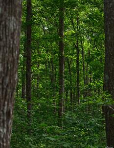 Strandzha Forest lll