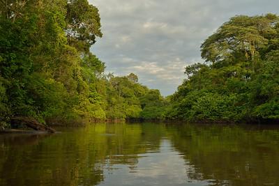 Fluvial Forest V