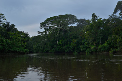 Fluvial Forest
