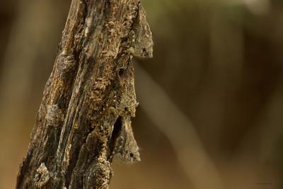Proboscis Bat II