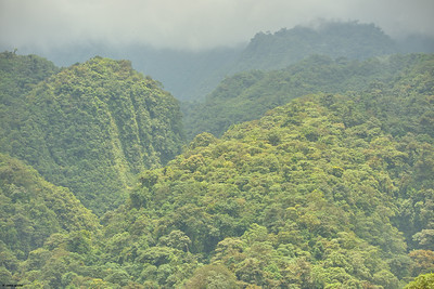 Cloud Forest III