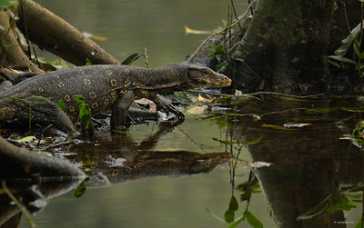 Water Monitor II
