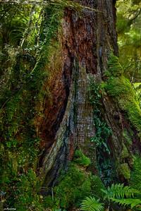Waikareiti Forest