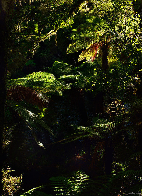 Paparoa Forest