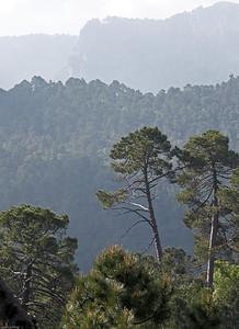 29 Sierra de Cazorla