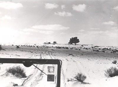 """בדרך לעץ : תחילת 1974 , ביקור במשבצת המיועדת כאשר העץ הבודד משמש נ""""צ בודד"""