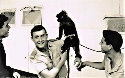 הקוף של המתקדם עם אייל וקס ואנגל