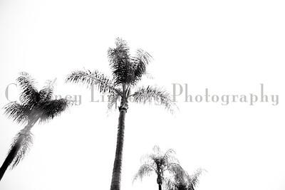 (C)CourtneyLindbergPhotography_071815_00006