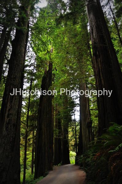 CA0002 - Coastal Redwoods