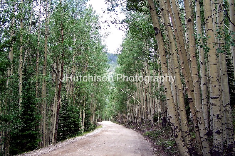 Aspen Lined Road