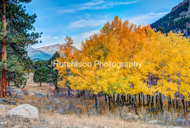 COL0036 - Display of Autumn in RMNP