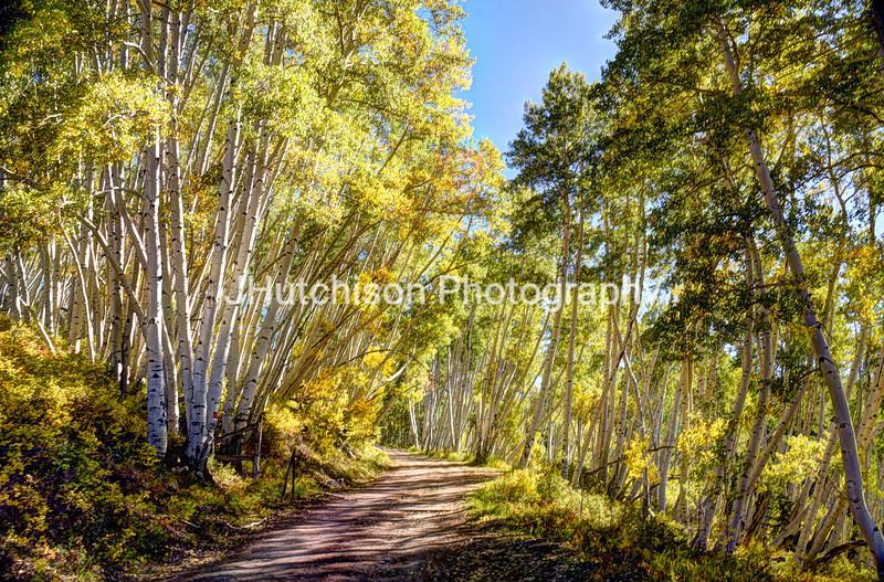 COL0032 - Autumn Aspen Drive