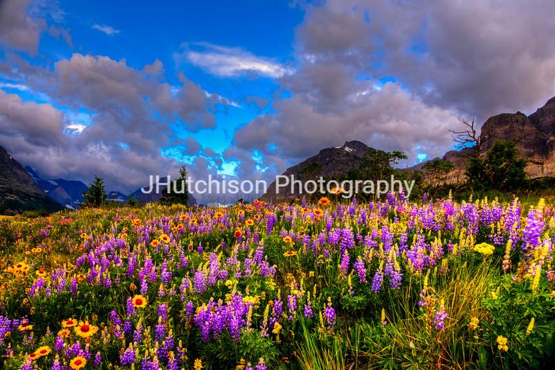 Many Glaciers Wild Flowers